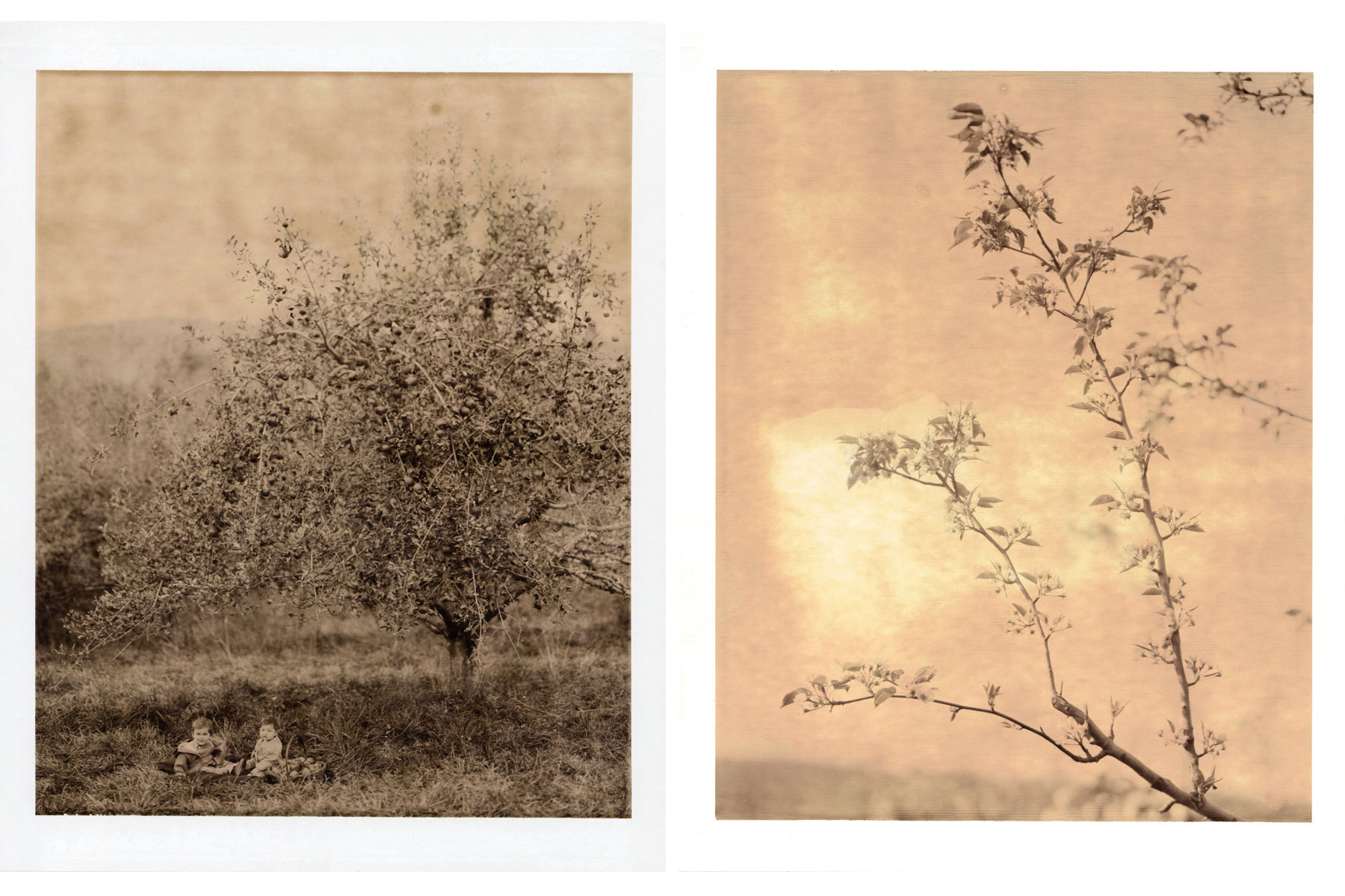 POLAROIDS - by Anna Williams